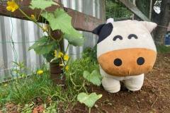 千葉県:成田ゆめ牧場ファミリーオートキャンプ場