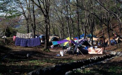 みどりの村キャンプ場写真3
