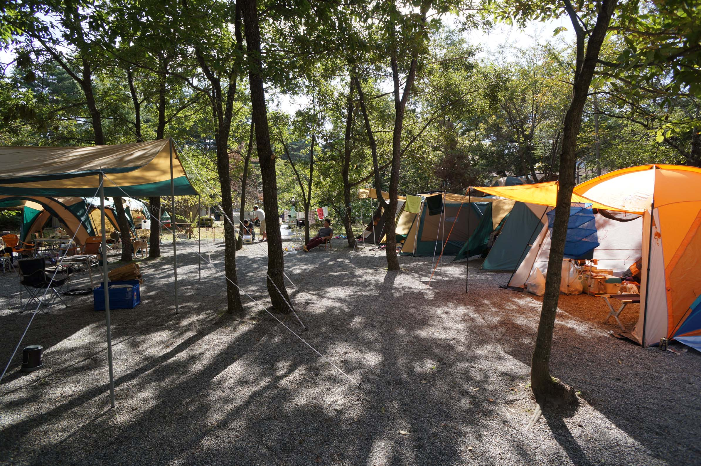 篠沢大滝キャンプ場写真7