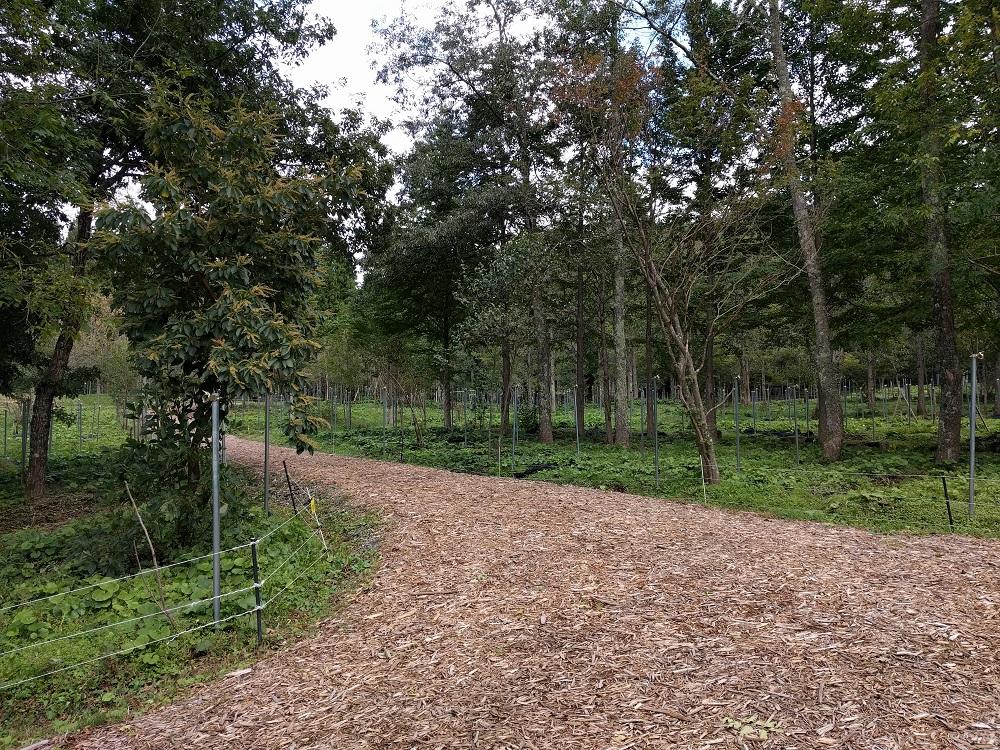 白馬森のわさび農園オートキャンプ場写真3