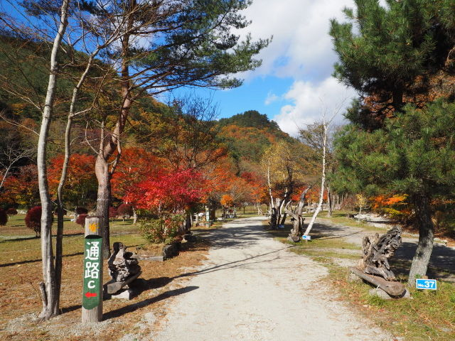 ナラ入沢渓流釣りキャンプ場写真8
