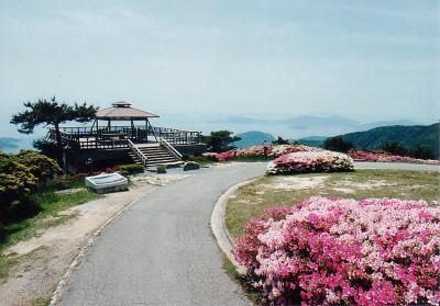 野呂山キャンプ場・オートキャンプ場写真8