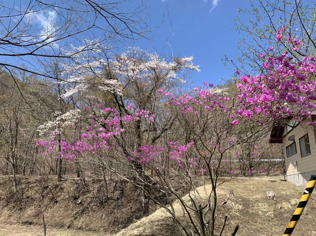 八風平キャンプ場写真7
